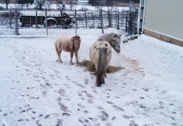 This snow in early November didn't seem to bother the horses, but it depressed me.