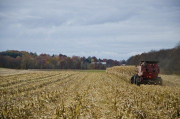 autumn corn harvest
