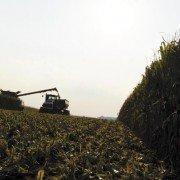 miller harvest