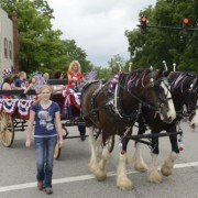 A draft horse team harness I formerly owned being used on two Clydesdales during a parade.