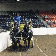 Dean Woodbury and his young assistant, Kaiden Lynch, drove a team of mares from Blue Ribbon Days Percherons during a breed demonstration at the Equine Affaire.