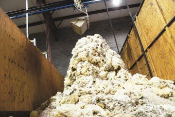 Here is one of the grade bins at Mid-States Wool Growers Cooperative.