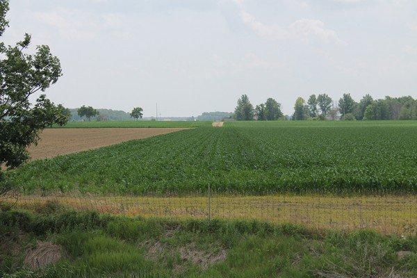 Corn east of Ada