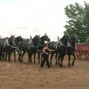 Eagle Creek Percherons was one of seven Ohio 6-horse hitches competing in the show.