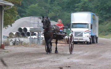 It was a dream of Kim's to own her own draft horse. She really enjoys driving this mare.