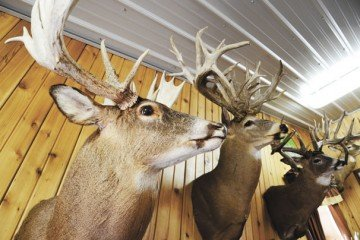 Waldvogel's Whitetails can turn some heads