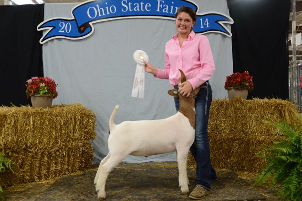 2014 Junior Meat Goat Wether Show – Ohio Ag Net | Ohio's Country Journal
