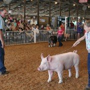Clinton County Fair 2014 3