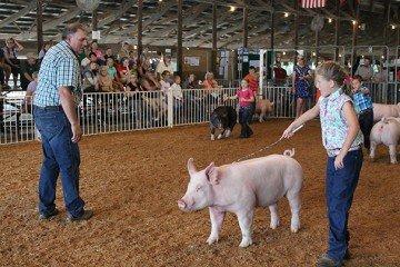 Clinton County Fair 2014 3