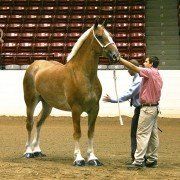 OSF Draft Horse Show 50