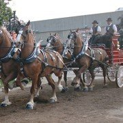 OSF Draft Horse Show 60