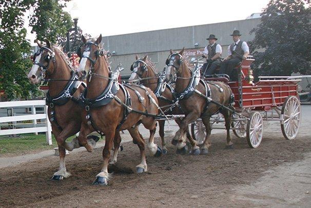 OSF Draft Horse Show 60