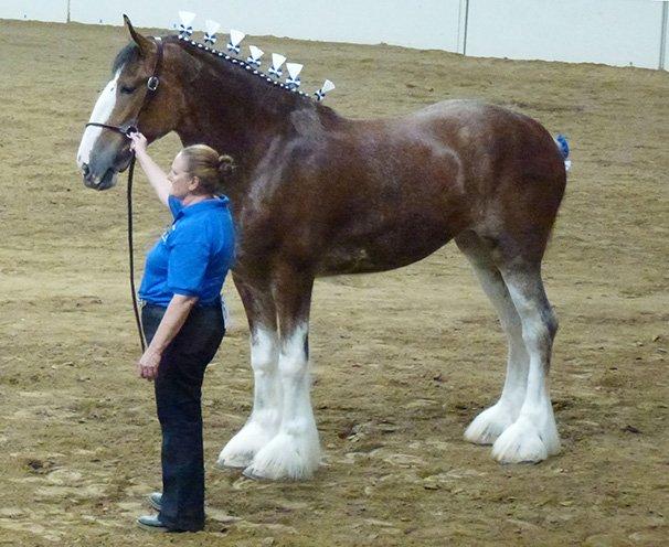 ISF Draft Horse 5 | Ohio Ag Net | Ohio's Country Journal