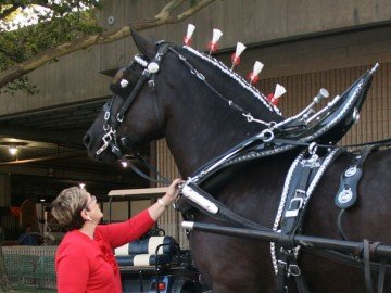 Watson chatted with her ladies' cart mare as they prepared to compete at the 2014 Ohio State Fair.
