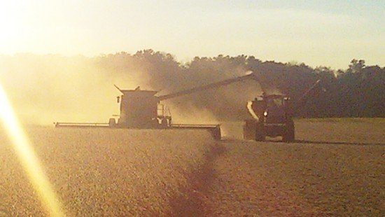 Harvest photo submitted by Jon Miller.