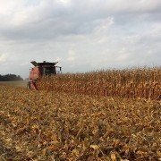 Cory Harrod harvesting the field. Plant population was about 33,000 stalks per acre.