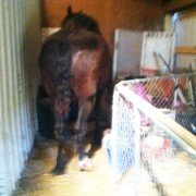This mare had managed to squeeze into a place she wasn't supposed to be and was stuck.