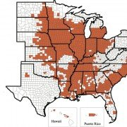 For a county to be colored red, at least one field has to be identified with populations over 200 eggs per cup soil.