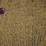 corn harvest from above