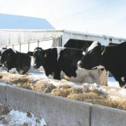 Nutrition needs to be a focus when temperatures drop.