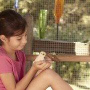 Purina_Baby Chick Photo