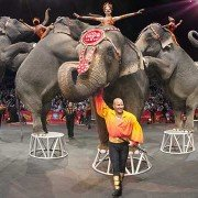 Ringling Bros. (PRNewsFoto/Ringling Bros. and Barnum & Bailey)