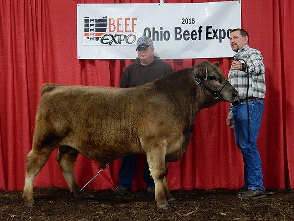Reserve Grand Champion Murray Grey Bull Limestone Bridge Farm, Bedford, TN – LRF Bullseye
