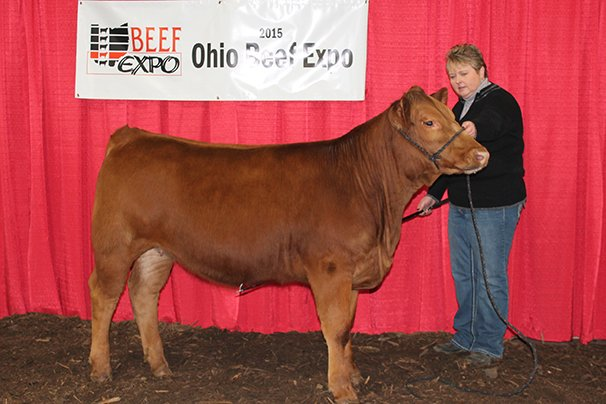 Grand Champion Gelbvieh Female Maple Valley Farm, Hillsboro – KISG MV Breanna 403B 5-20-14