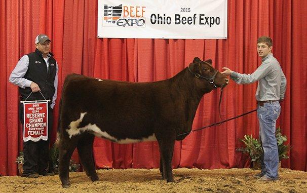 Reserve Grand Champion Shorthorn Female Cornerstone Farms & Boyert Show Cattle – CSF Jane Mary STZ 2-18-14