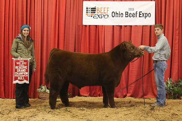 Reserve Grand Champion Shorthorn Plus Bull Boyert Show Cattle & Cornerstone Farms – Boy Testament 410 TPX ET 5-15-14