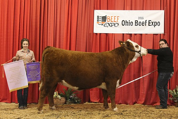 Reserve Grand Champion Hereford Heifer MEB Polled Herefords, Wooster – MEB 100W Hailey A2 3-30-13