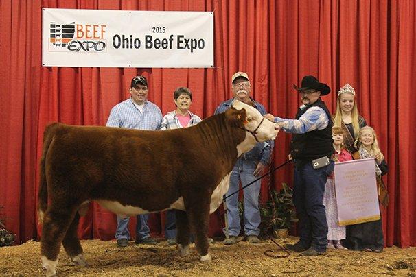 Reserve Grand Champion Hereford Bull Wilson Stock Farm, Kensington – Wilson 9050 Dingo 45B 4-14-14