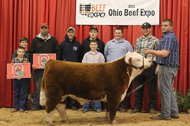 Grand Champion Mini Hereford Bull 4 Wiley Farm – 4 Wiley Mountain Mitchell 9-7-13