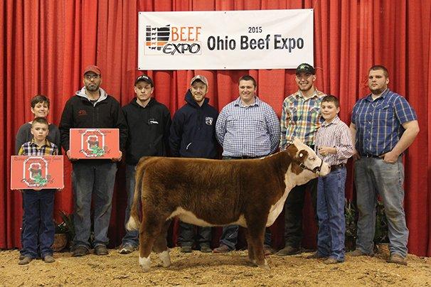 Reserve Grand Champion Mini Hereford Bull Ledge N' Woods Farm – LWF Casey's Golden Surprise 4-25-13