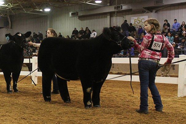 Champion Maine-Anjou Steer: Montana Hulsmeyer, Auglaize County