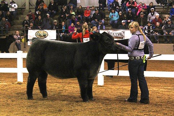 Champion ShorthornPlus Steer: Kendra Gabriel, Pickaway County