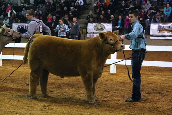 Champion AOB Steer: Wyatt Daniels, Allen County