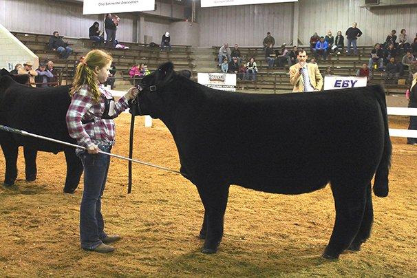Champion Crossbred Steer: Addison Jones, Allen County