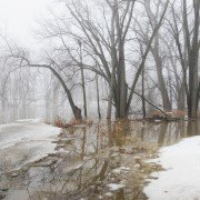 The swollen Blanchard River in Putnam County on a foggy March morning has breeched its banks on its trip to the Maumee River and, eventually, Lake Erie.