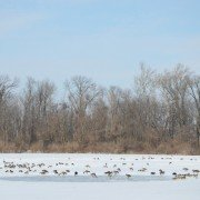 No manure application on frozen ground!