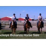 Photo courtesy of the Buckeye Bonanza Horse Sale Facebook page.
