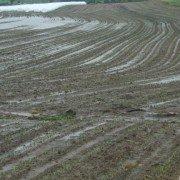 Wet fields in Coshocton Co