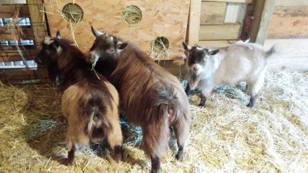 Easy Homemade Hay Saving Small Livestock Hay Feeders Ohio Ag Net