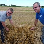 Jeremy Goings and his father, Doug, show just how much moisture remains until the rows of straw