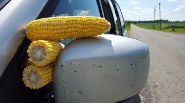 Highland Co corn