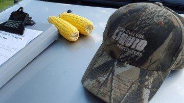 Clinton Co corn