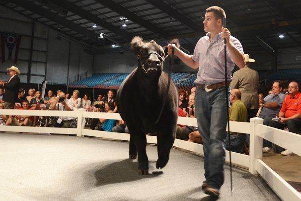 The Grand Champion Market Beef was exhibited by Tyler Clark, Miami County, and sold to Kroger for $50,000.