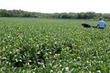 Champaign Co. beans