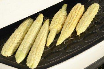 Defiance Co. corn