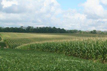 Ashland Co corn